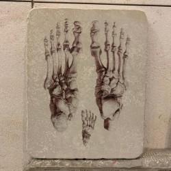 piedra litográfica huesos del pie