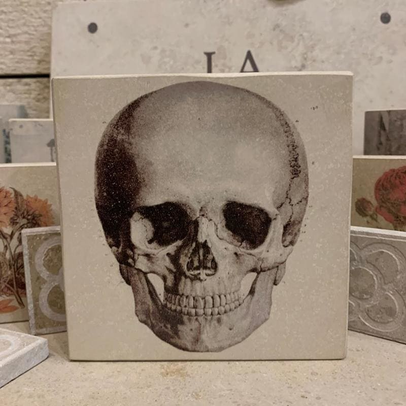 Minilitos calavera piedra litografica solnhofen