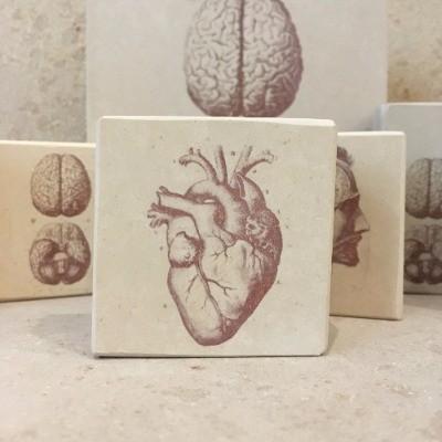 Minilito anatomia corazon