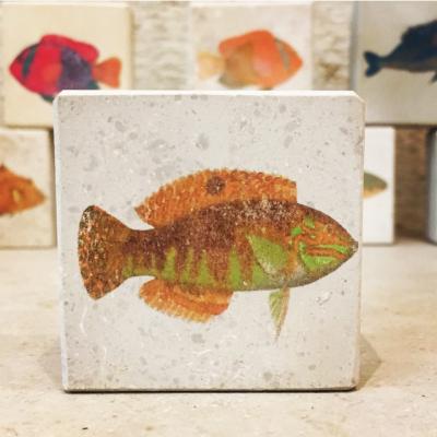 pez estampado en piedra litografica